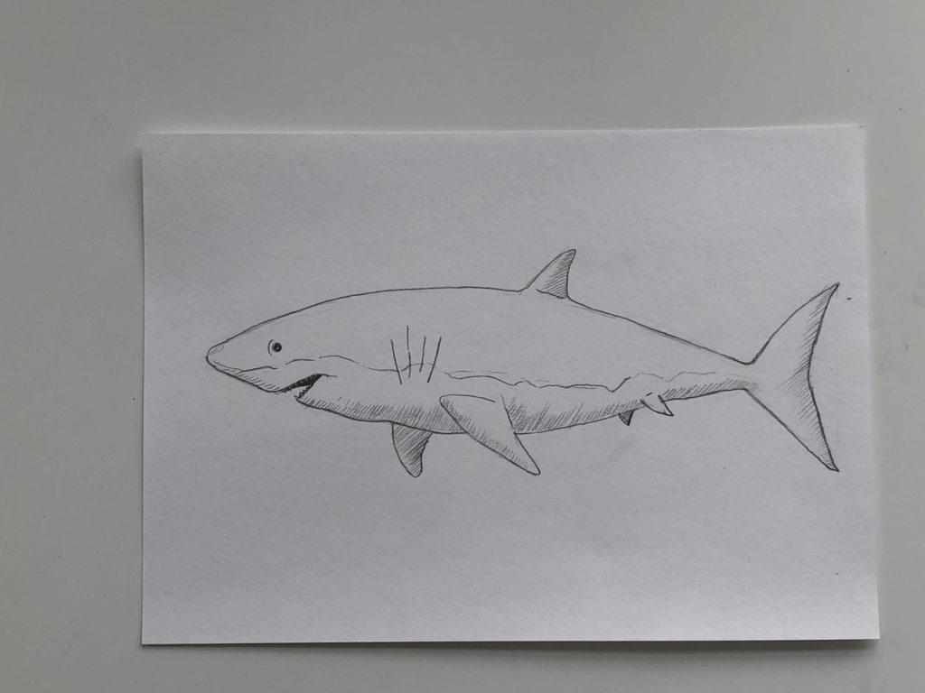Как нарисовать акулу карандашом поэтапно - простая акула 3 этап - фото