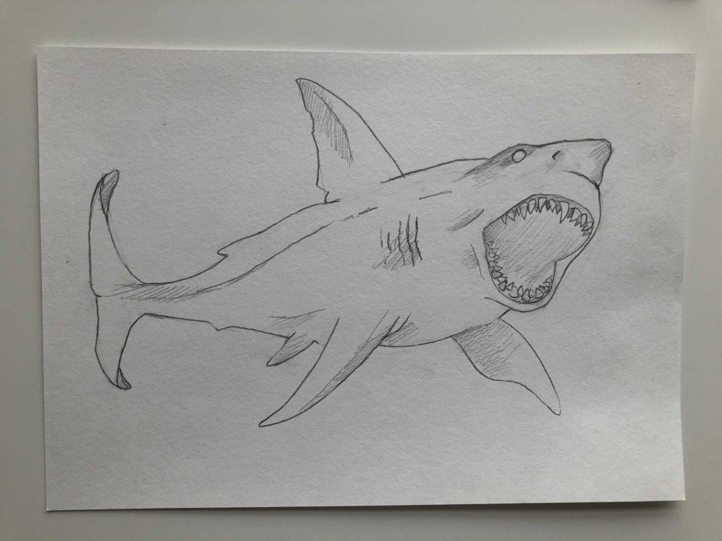 Как нарисовать акулу карандашом поэтапно - тигровая 4 этап - фото