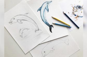 Как нарисовать дельфина карандашом - фото