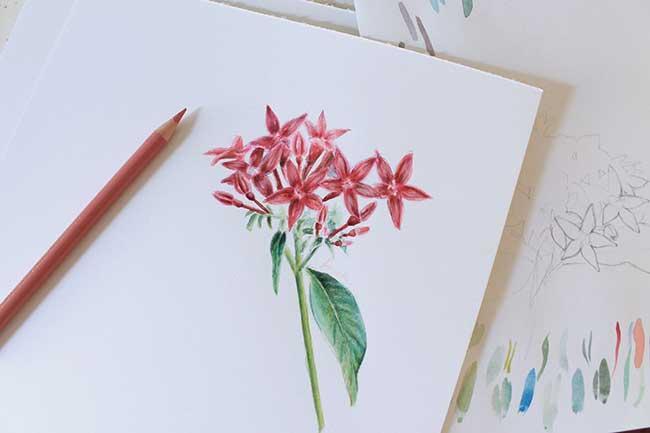 Техники рисования акварелью - цветные карандаши - фото