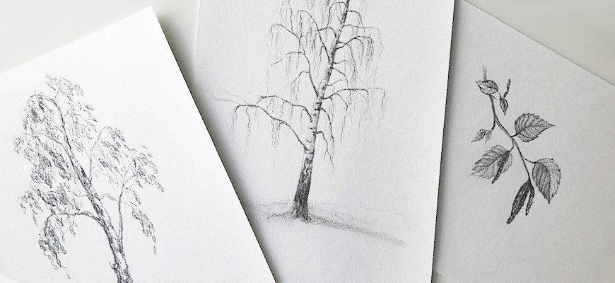 Как нарисовать березу карандашом - фото