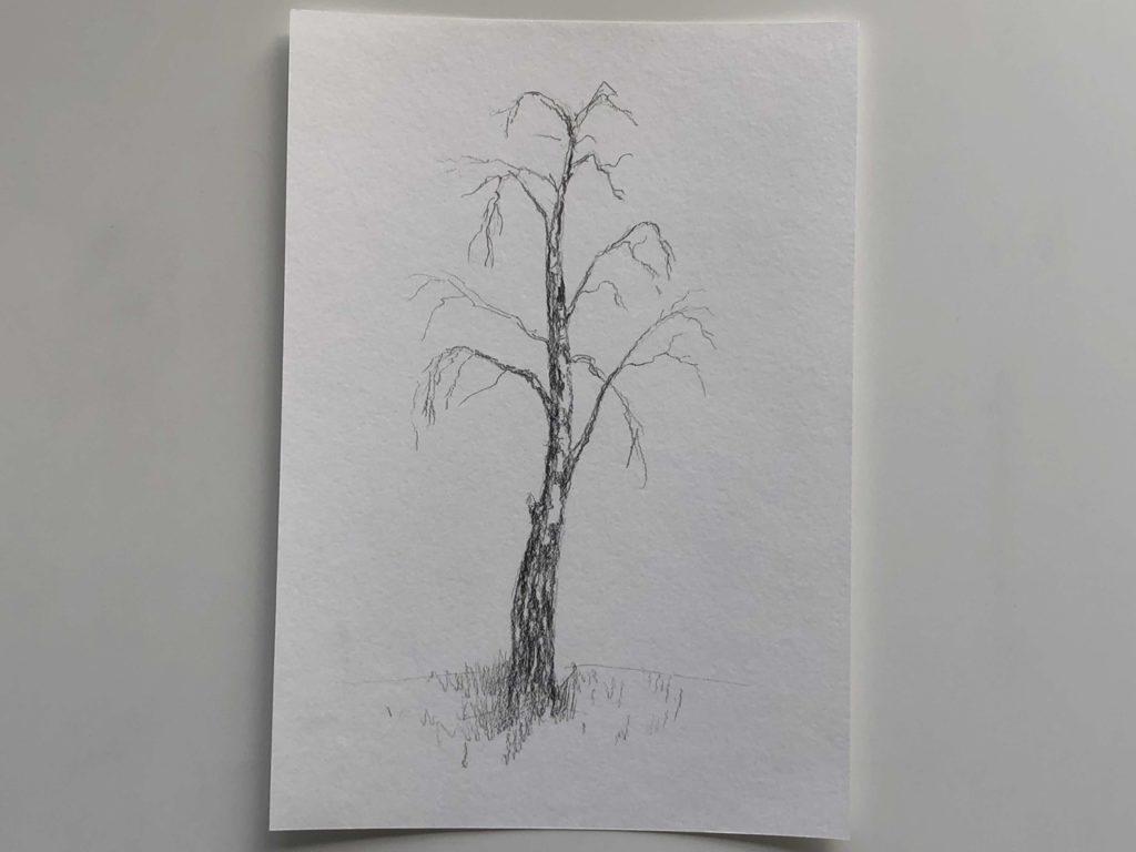 Самый простой способ нарисовать березу - 2 этап - фото