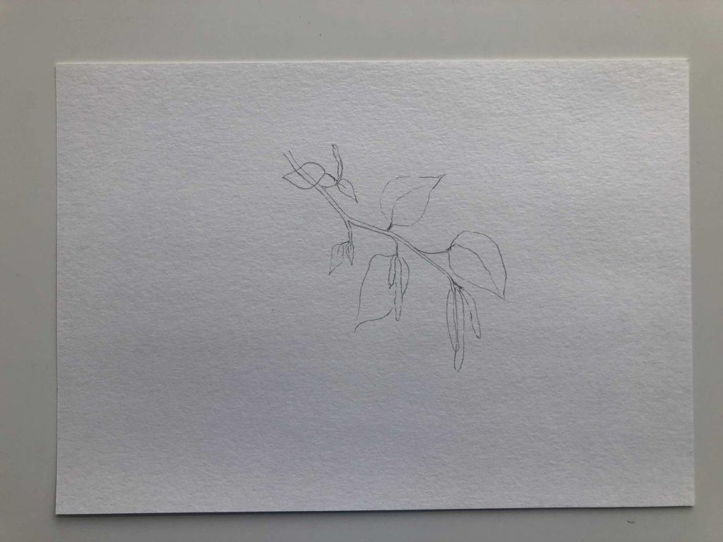 Как нарисовать березу весной с сережками - 1 этап - фото