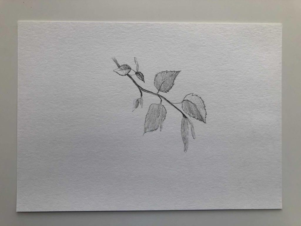 Как нарисовать березу весной с сережками - 2 этап - фото