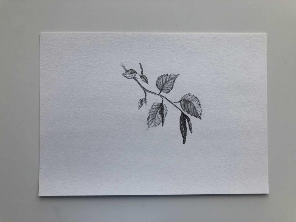 Как нарисовать березу весной с сережками - 3 этап - фото