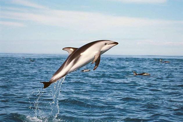 Идеи с фото для рисования дельфина - выпрыгивает из воды - фото