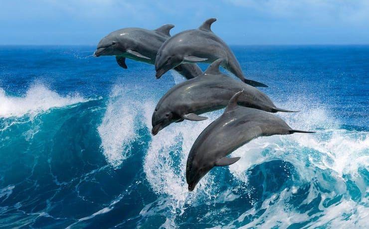 Идеи с фото для рисования дельфина - выпрыгивающие из воды дельфины - фото