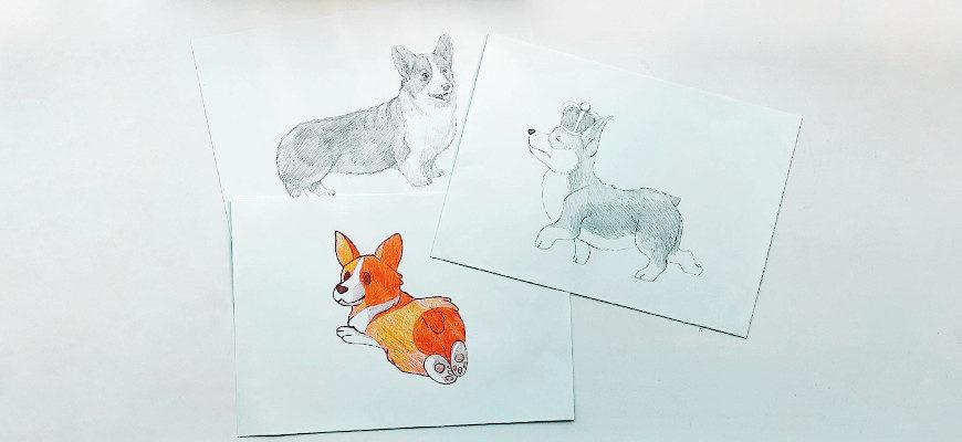 Как нарисовать милого корги карандашом - фото