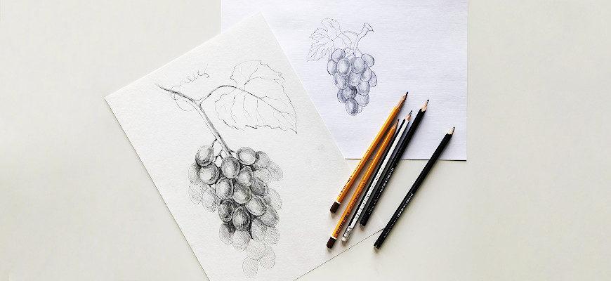 Как нарисовать виноград карандашом - фото