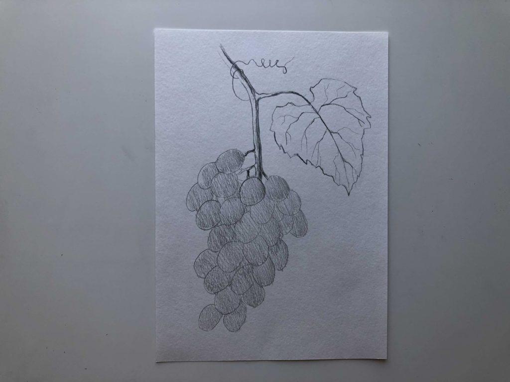 Как нарисовать виноград карандашом - лоза - 3 этап