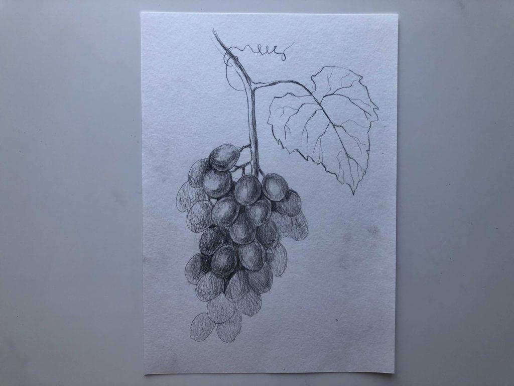 Как нарисовать виноград карандашом - лоза - 4 этап